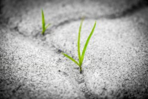 Pixabay-2018.01.01-Grass-in-crack-300x200.jpg